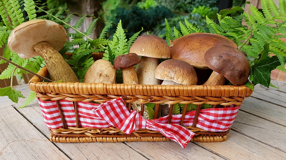 houby - kde roustou mapa